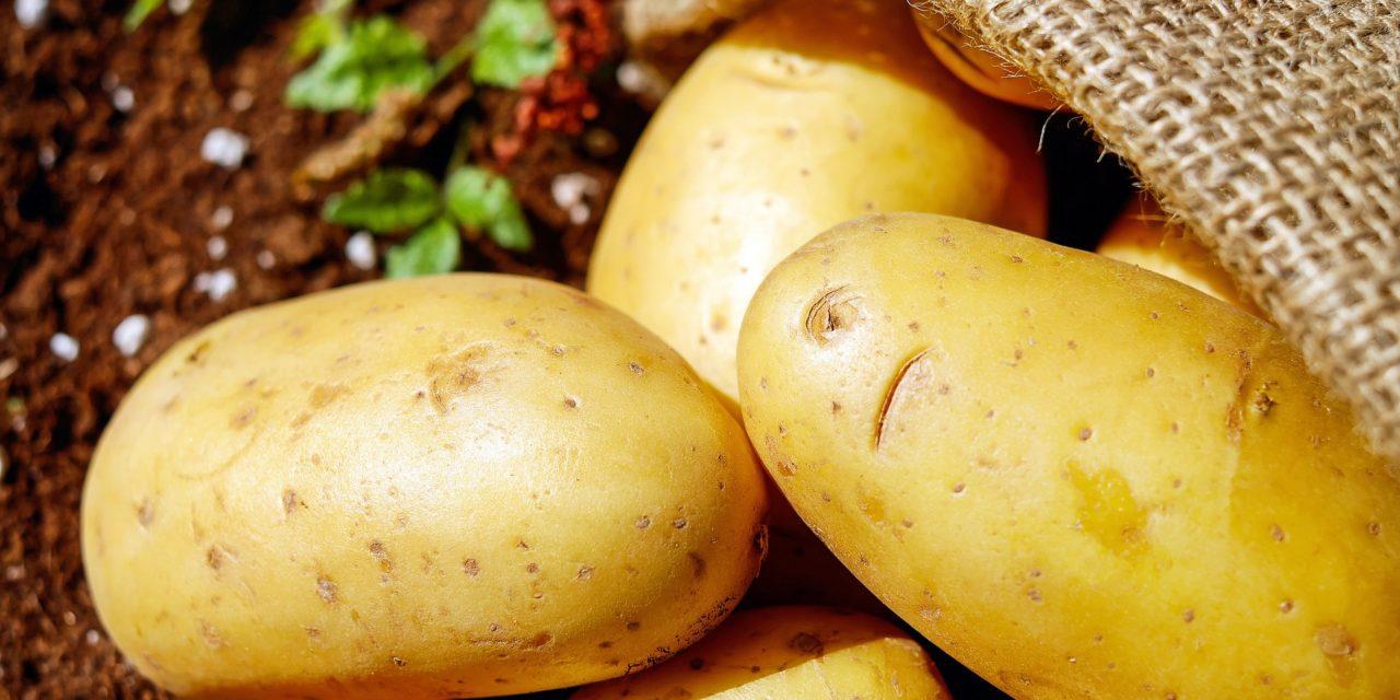Święto Pieczonego Ziemniaka